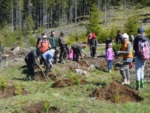 Elevi, silvicultori, polițiști și reprezentanți ai administrației locale, la acțiunea de împădurire de la Cârlibaba