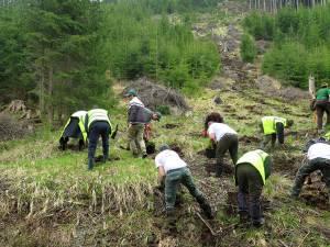 Voluntariat în Parcul Naţional Călimani
