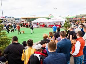 Bucovina Dog Show este cel mai important eveniment chinologic din regiunea Moldovei