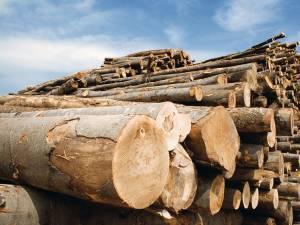Peste 100 de metri cubi de lemn confiscat în timpul unor controale ale poliţiei