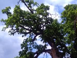 """Simpozionul Internaţional """"Arborii Ocrotiţi – simbol al vitalităţii, diversităţii şi frumuseţii"""", la Cajvana"""