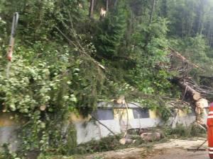 Copacii căzuţi pe DN 17 în zona Argestru au blocat circulaţia între Vatra Dornei și Iacobeni