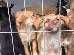 Colectă pentru adăpostul de câini al asociaţiei Casa lui Patrocle