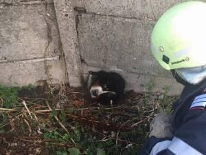Câine cu capul blocat într-un gard de beton, salvat de pompieri
