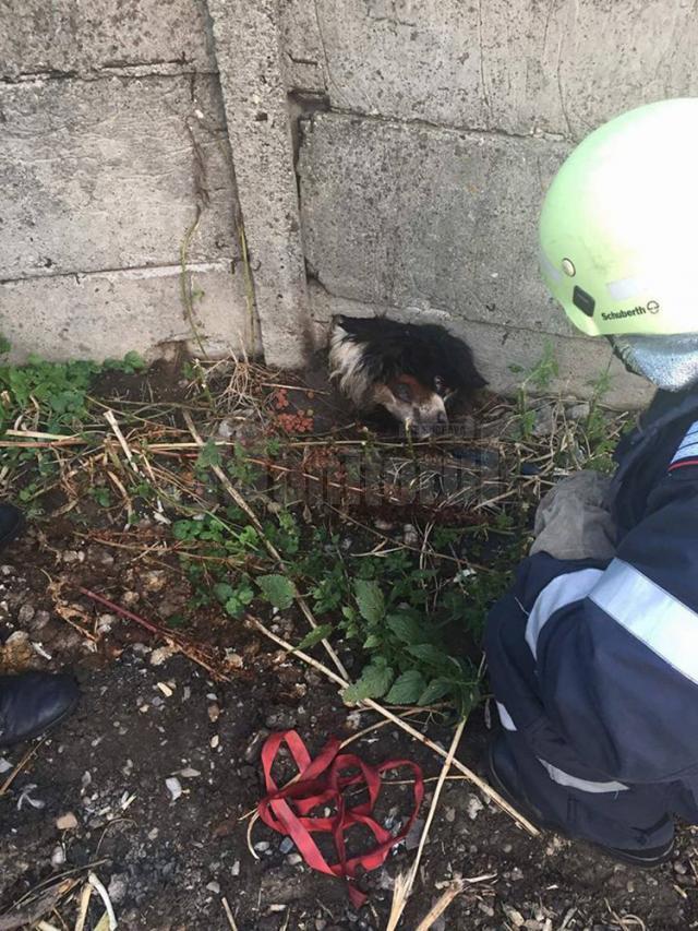 Câinele rămăsese blocat în placa din beton a unui gard