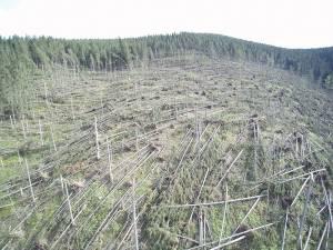 Cele mai mari pagube produse de fenomenele meteo extreme au fost în pădurile Sucevei