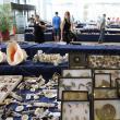 Fosile de dinozauri, pietre preţioase şi bijuterii, la târgul de la Iulius Mall Suceava