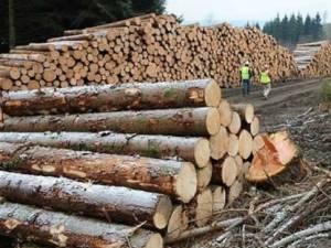 Materialul lemnos transportat fără acte în regulă a fost confiscat
