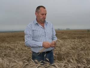 Producţii la grâu excelente în acest an
