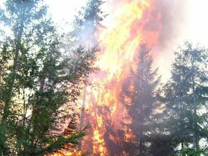 Incendiile de păduri, în creştere în prima jumătate a anului