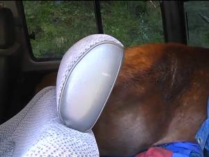 Cerbii împuşcaţi, găsiţi în maşina de teren abandonată de braconieri