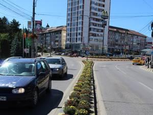 Crizantemele care înfrumuseţau zona centrală a Sucevei, săptămâna trecută