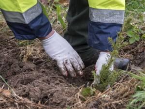 """""""Pădurea de Mâine"""" – un milion de puieţi urmează să fie plantaţi pe terenuri forestiere cu dificultăţi de regenerare"""