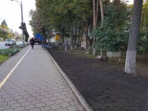 Tufele de gard viu au dispărut din zona Policinicii Areni