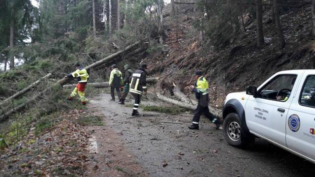 Intervenţia pe TransRarău a fost periculoasă, din cauza arborilor doborâţi de vânt