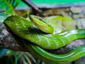 """""""Lumea reptilelor"""", la Muzeul de Ştiințele Naturii Suceava"""