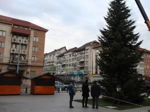 Bradul din centrul Sucevei a fost amplasat ieri, în noua sa locaţie