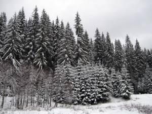 Regia Naţională a Pădurilor vrea să pună mâna pe pădurile Arhiepiscopiei Sucevei şi Rădăuţilor