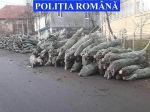 Brazi de Crăciun confiscaţi de poliţişti