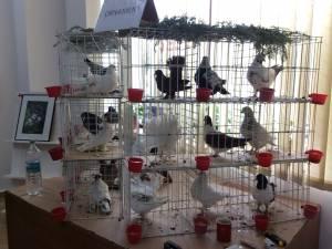 Expoziție de porumbei voiajori și de ornament, la Rădăuţi
