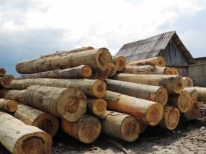 Echipele de control au constatat abateri grave în privinţa înregistrării avizelor de livrare a lemnului şi a raportării datelor