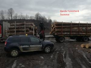 Lemn rotund, confiscat de Garda Forestieră vineri dimineață
