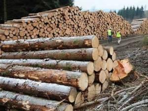 Material lemnos, în valoare de 6.180 lei, a fost confiscat