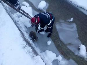 Echipajul de la Detașamentul de pompieri Câmpulung Moldovenesc a acționat imediat, puiul fiind ridicat din zona în care era blocat, învelit și dus la căldură