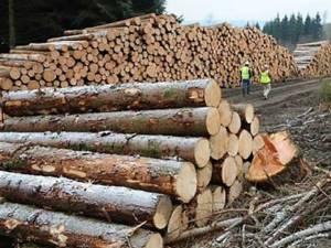 Întreaga cantitate de material lemnos transportat fără acte legale a fost  confiscată