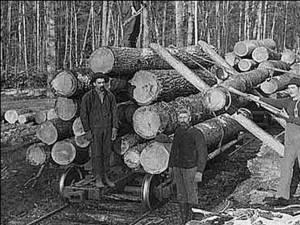 """""""Transportul materialului lemnos"""""""