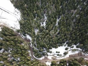 Drumul forestier și mormanele de bușteni de pe marginea sa