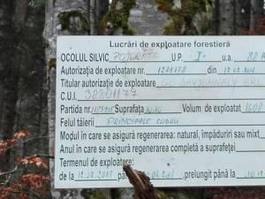 Tăierile de arbori de pe Rarău, lucrări autorizate și efectuate conform regulilor