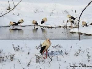 Berze îngheţate de frig - Foto Societatea ornitologică din România