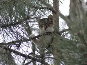 Pisica rămasa blocată în copac