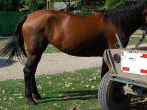 Hoții i-au furat calul și căruța unui bărbat Foto satmareanul.net