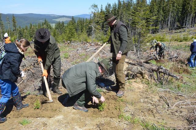 Silvicultori şi voluntari la o acţiune de împădurire