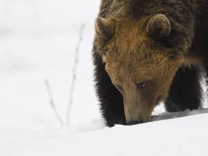 Acţiune de evaluare a speciilor de animale strict protejate Foto: RPN