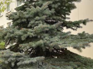 Studenţii au montat plăcuțe metalice cu informaţii despre fiecare arbore sau arbust