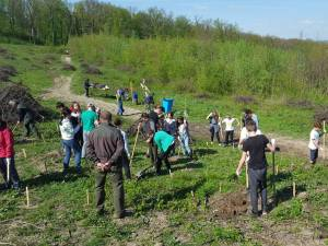 Elevii au plantat 1.000 de arbori la Mihoveni
