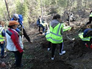 Peste 700 de voluntari s-au implicat în campaniile de împădurire de sâmbătă, la Vama și la Pojorâta