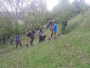 10.000 de de puieți de salcâm au fost plantați la Călinești, pe un teren degradat