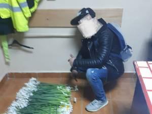 Peste 2.000 de narcise şi 100 de lalele au fost identificate în bagajele hoţilor