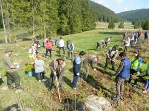 Acţiunea de împădurire a avut loc zilele trecute în zona de munte a judeţului Suceava, la iniţiativa celor de la Ocolul Silvic Cârlibaba