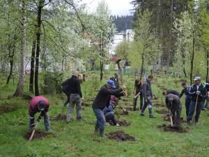 Campanie de împădurire organizată de Primăria Vatra Dornei în parcul central