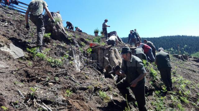 Acțiune de plantare a Gărzii Forestiere Suceava, în comuna Brodina