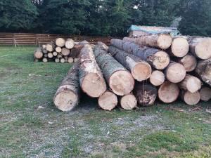 Autoutilitară şi lemn confiscate, în urma unui transport ilegal