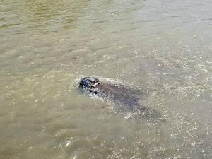 Cadavrul bărbatului a fost văzut pe o insulă de pietriş, în mijlocul râului