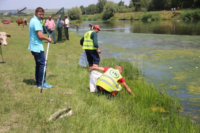 Peste o sută de kilograme de peşte mort, adunat de pe o porțiune de doi kilometri a râului Suceava