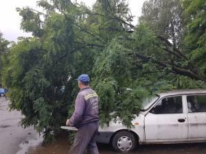 Copacul cazut peste masini a fost indepartat de echipele de interventie de la Primarie