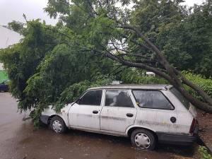 Copac prăbuşit peste maşini, pe strada Vasile Bumbac